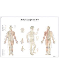 3B Scientific 12-4602 Body Acupuncture Anatomical Charts